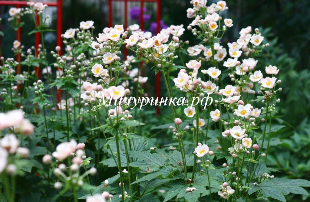 Наши цветы у школы